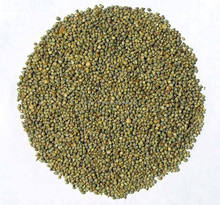 Bajra For Export