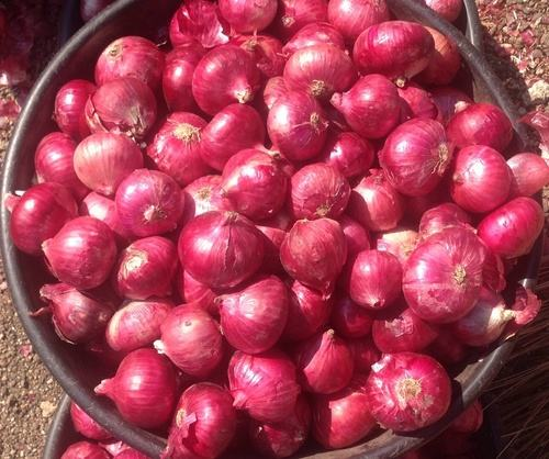 Fresh Onion - High quality and best price