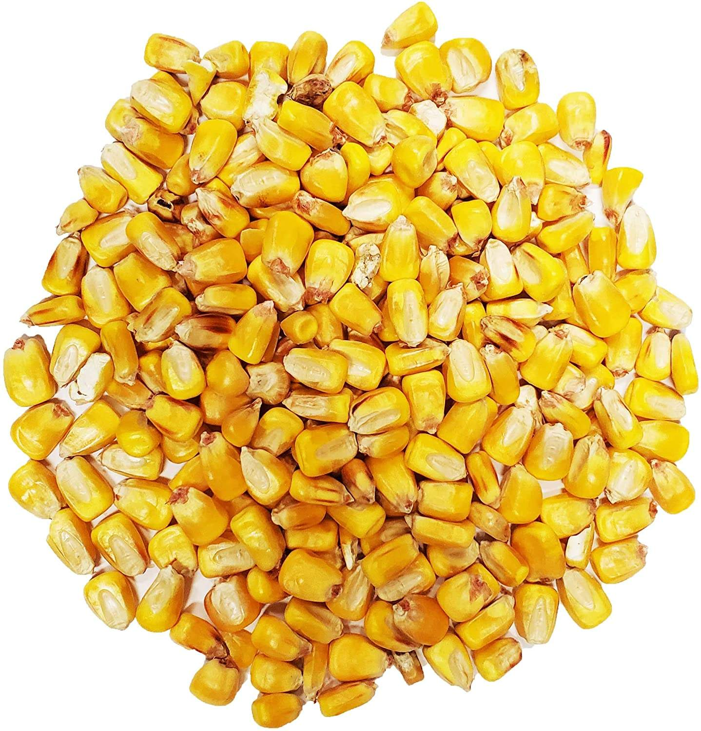Feed Corn For Animals In Bulk For Wholesale