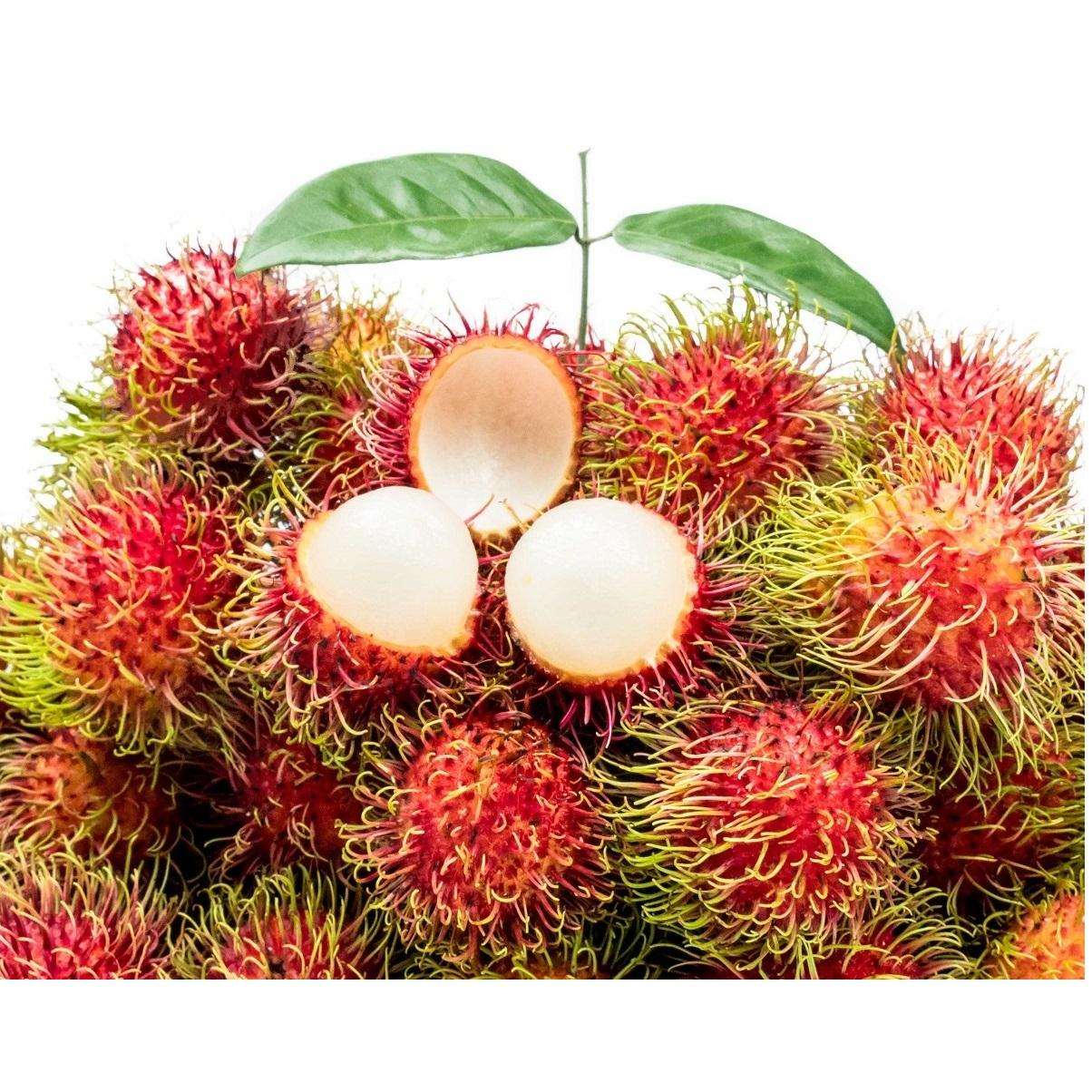 High Quality Fresh Fruit Round Red Rambutan Java Best Tropical Fruit With Size 4cm From Vietnam Company
