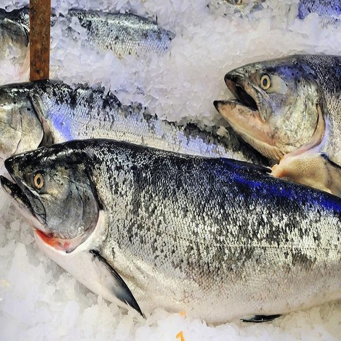 Frozen Atlantic Salmon Fish