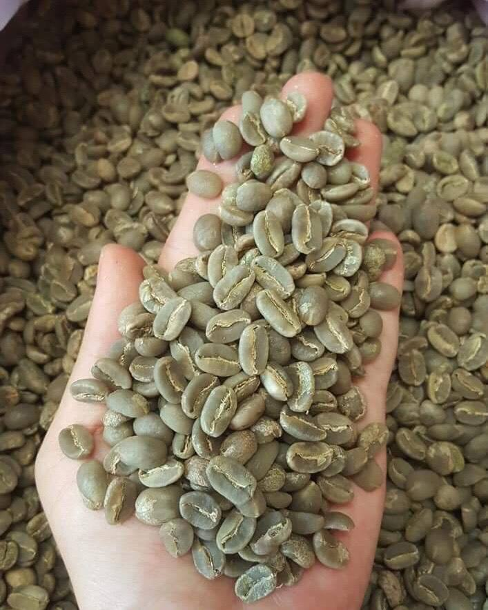 Premium Screen 18 Raw High Quality Arabica Green Coffee Bean