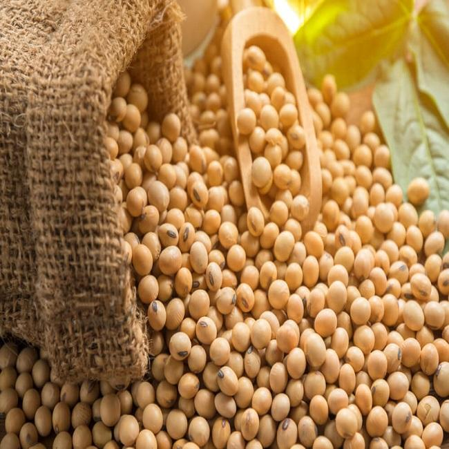Premium Quality Organic Soybean / Soya Bean / Soybeans Seeds