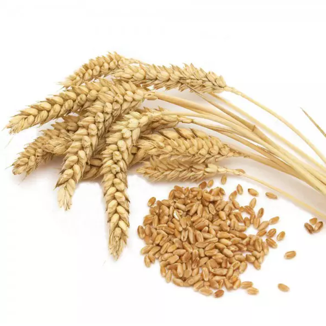 Wheat Bran/ Rice Brand For Animal Feed