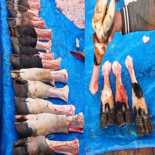 Top Quality Beef Feet / Cow Leg For Sale