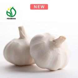 fresh garlic in china