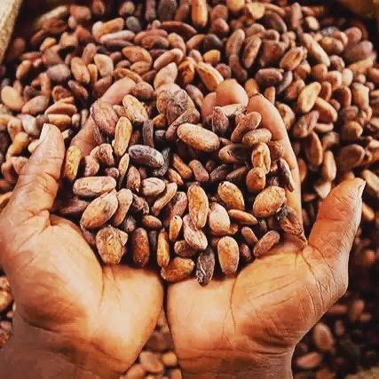 100% High Quality Cocoa Beans For Sale