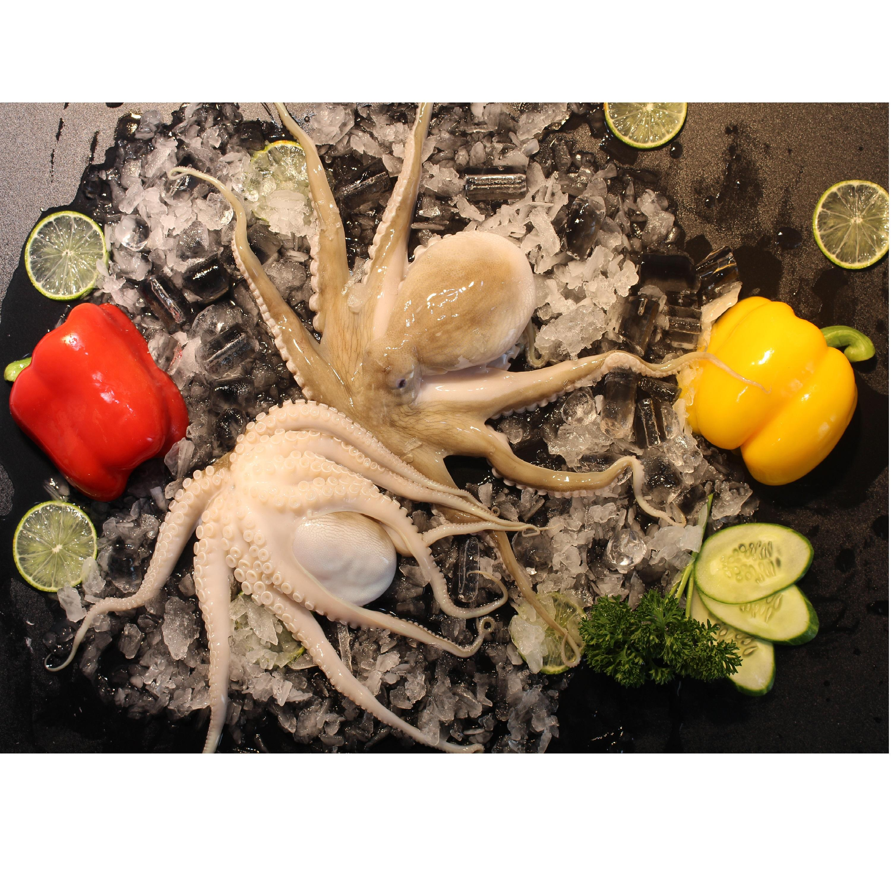 High Quality Whole Piece Frozen Shelf Life 12 Months From Vietnam Octopus