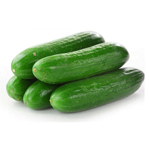 High Quality Fresh green Cucumber for sale