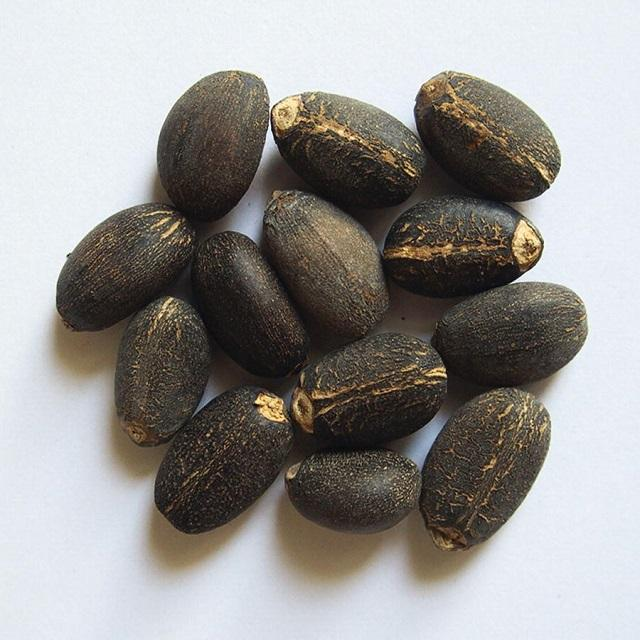 Top Selling Quality New Crop Jatropha Seeds For sale