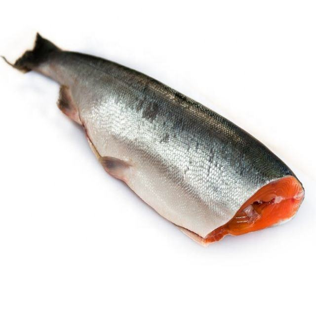 HG-off Fresh frozen BQF IQF oncorhynchus nerka red salmon fish