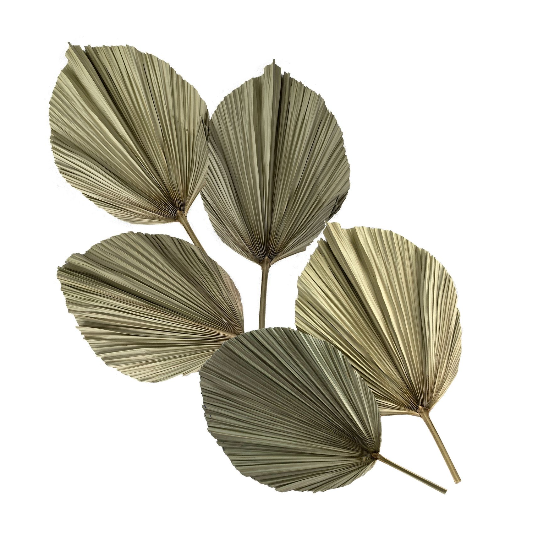 Hot selling Amazon dried palm leaves & palm tree leaves for Wedding Decoration Flower