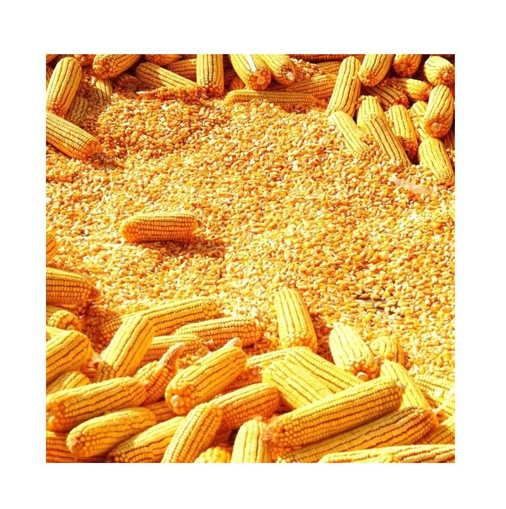 EXCELLENT GRADE 1 YELLOW CORN & WHITE CORN/MAIZE FOR HUMAN AND ANIMAL FEED