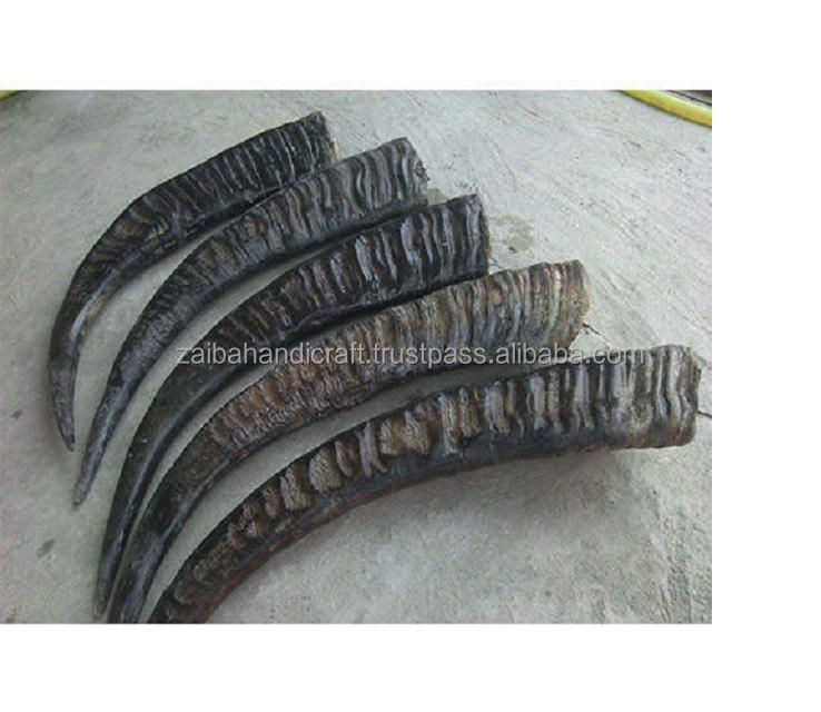 Quality Buffalo horn raw material long buffalo horn