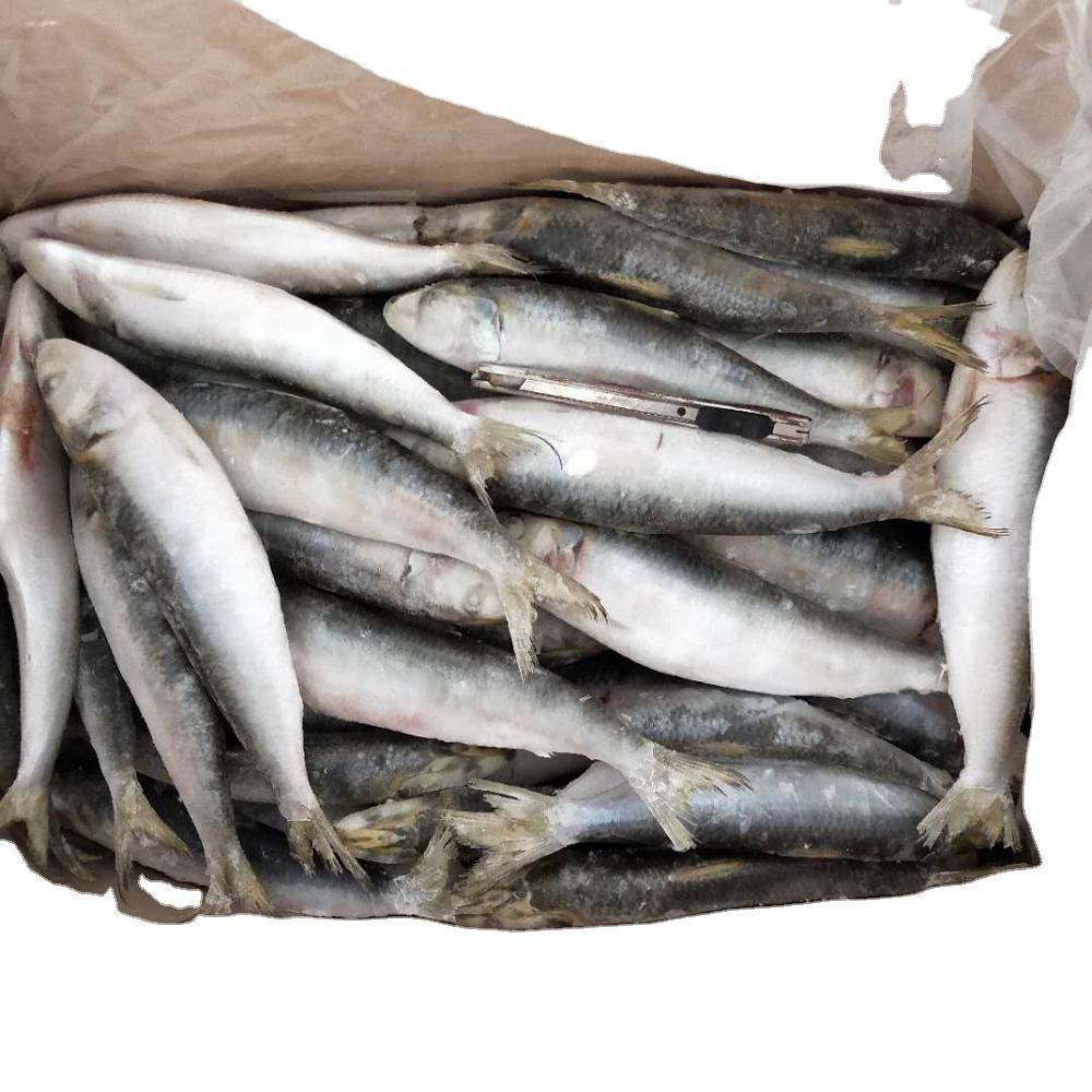 Good Quality Fresh Seafood price frozen sardine fish