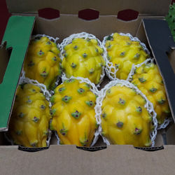 Yellow Dragon Fruit Pitahaya Pitaya