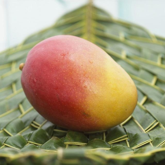 High Quality Golden Mango