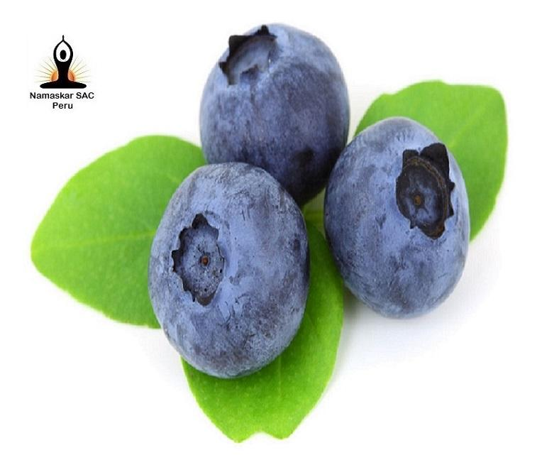 Fresh blueberry fruit prices for EXPORT