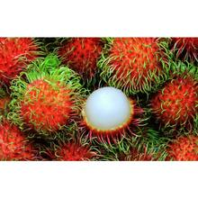 100% Natural Fresh Thai Rambutan Top Best Product Organic Type Brand Thai From Dinh Gia Company