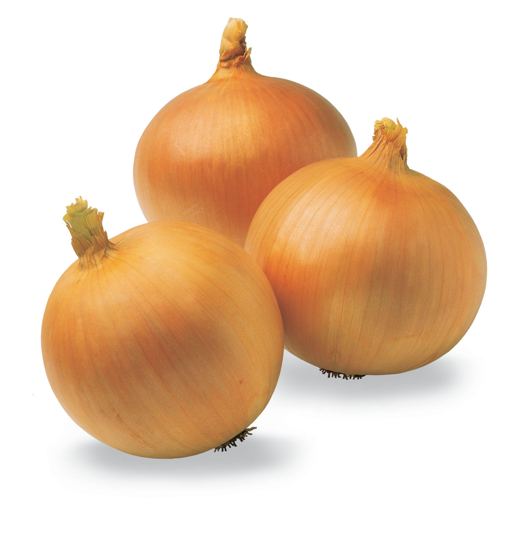 fresh quality onion for sale
