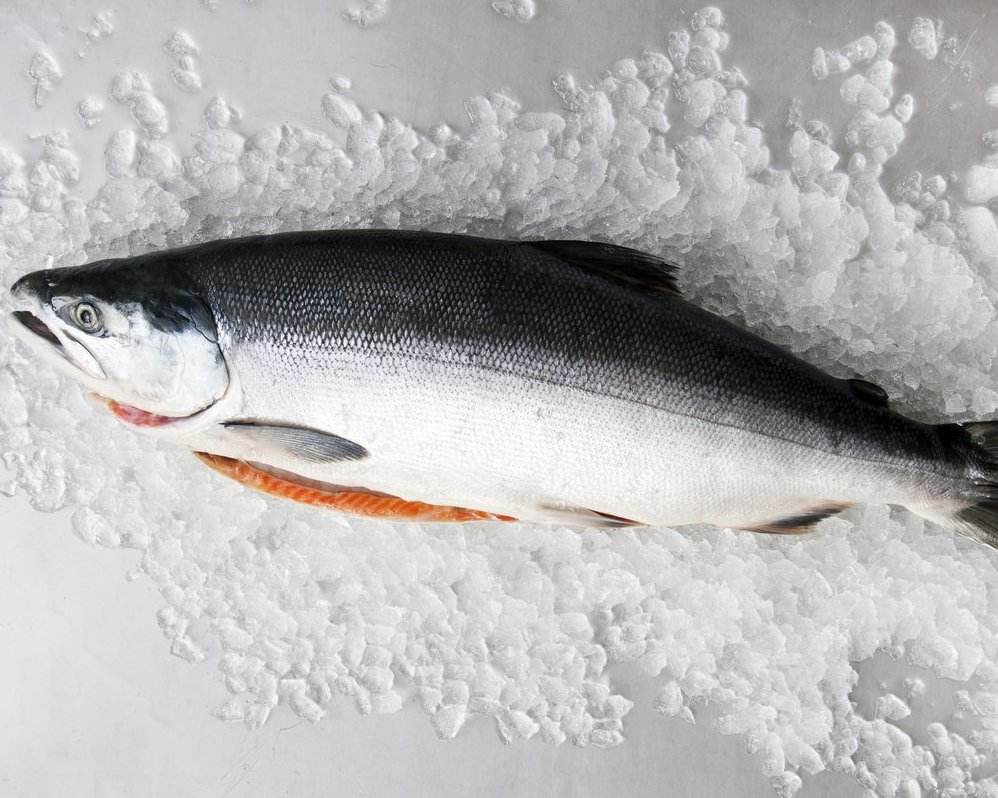 Fresh and Frozen Atlantic Salmon Fish/Whole frozen salmon