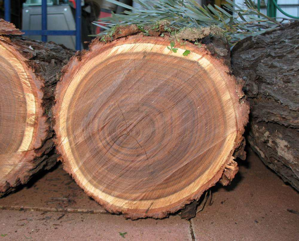 10-11CM Wooden Log Slice Natural Wood Slices Wooden Circles for DIY Crafts Wedding Decorations Christmas Ornaments 1 buyer