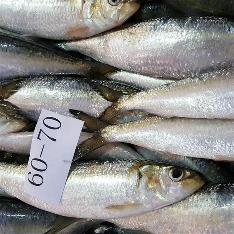Seafood Frozen Whole Round Herring Sardine Fish