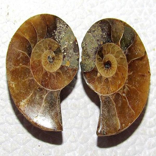 Natural Ammonite smooth plain fancy shape loose gemstone cabochon