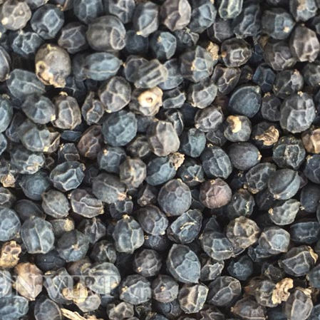 HOT SELLING ALIBABA BEST SELLING BLACK PEPPER 500G/L FAQ MANUFACTURING COMPANIES VIETNAM