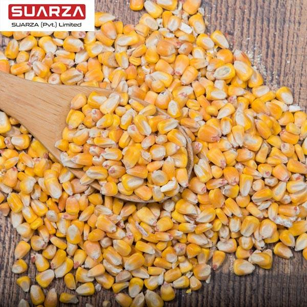 Pakistan yellow corn/maize/animal feed premium quality