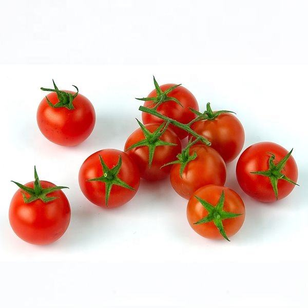 Fresh Red and Green Tomatoes/ Cherry Tomatoes with sweet taste