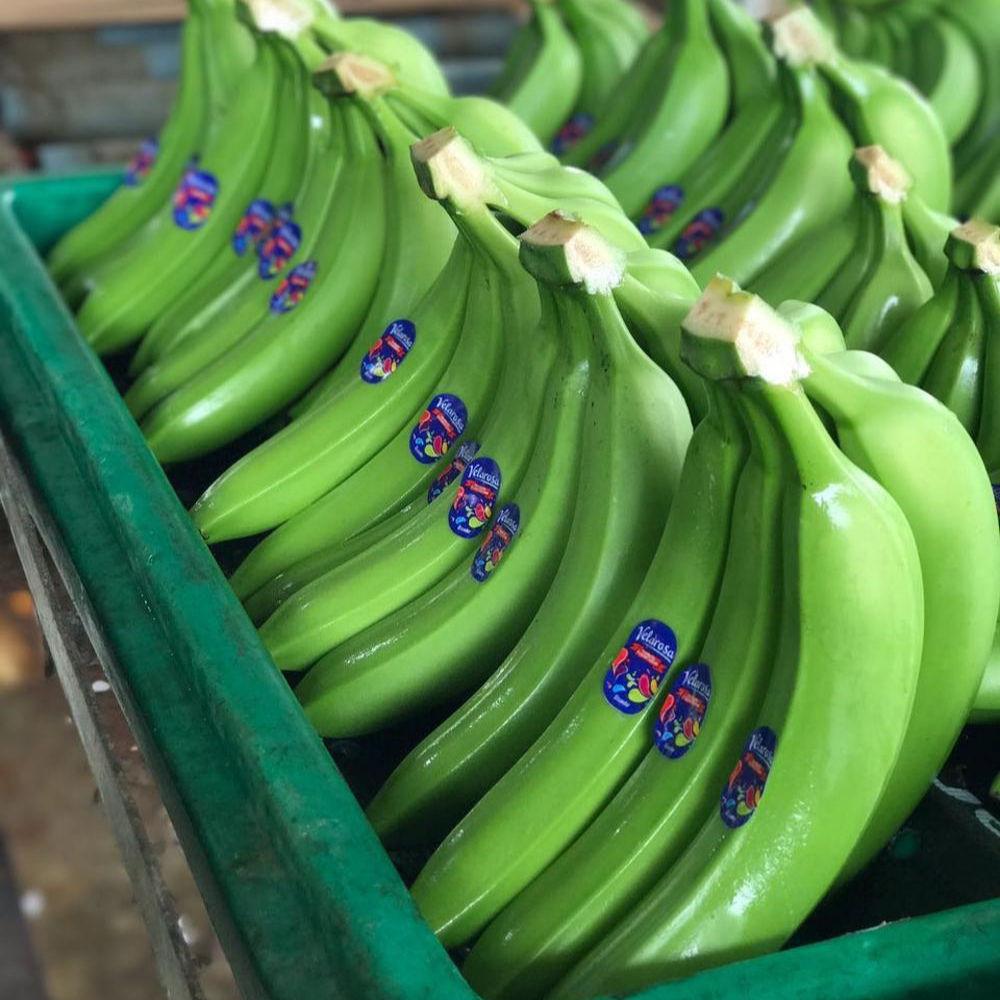Good Fresh Cavendish Banana / Fresh Banana