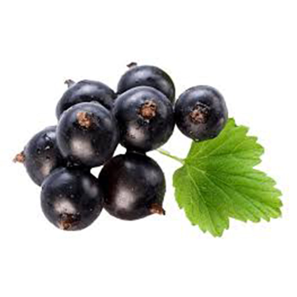 Organic Healthy Delicate Blackcurrant Fruit