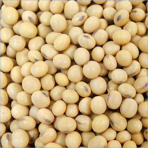 Top quality Non GMO Soybean, Soybean seeds,Organic soybean seeds