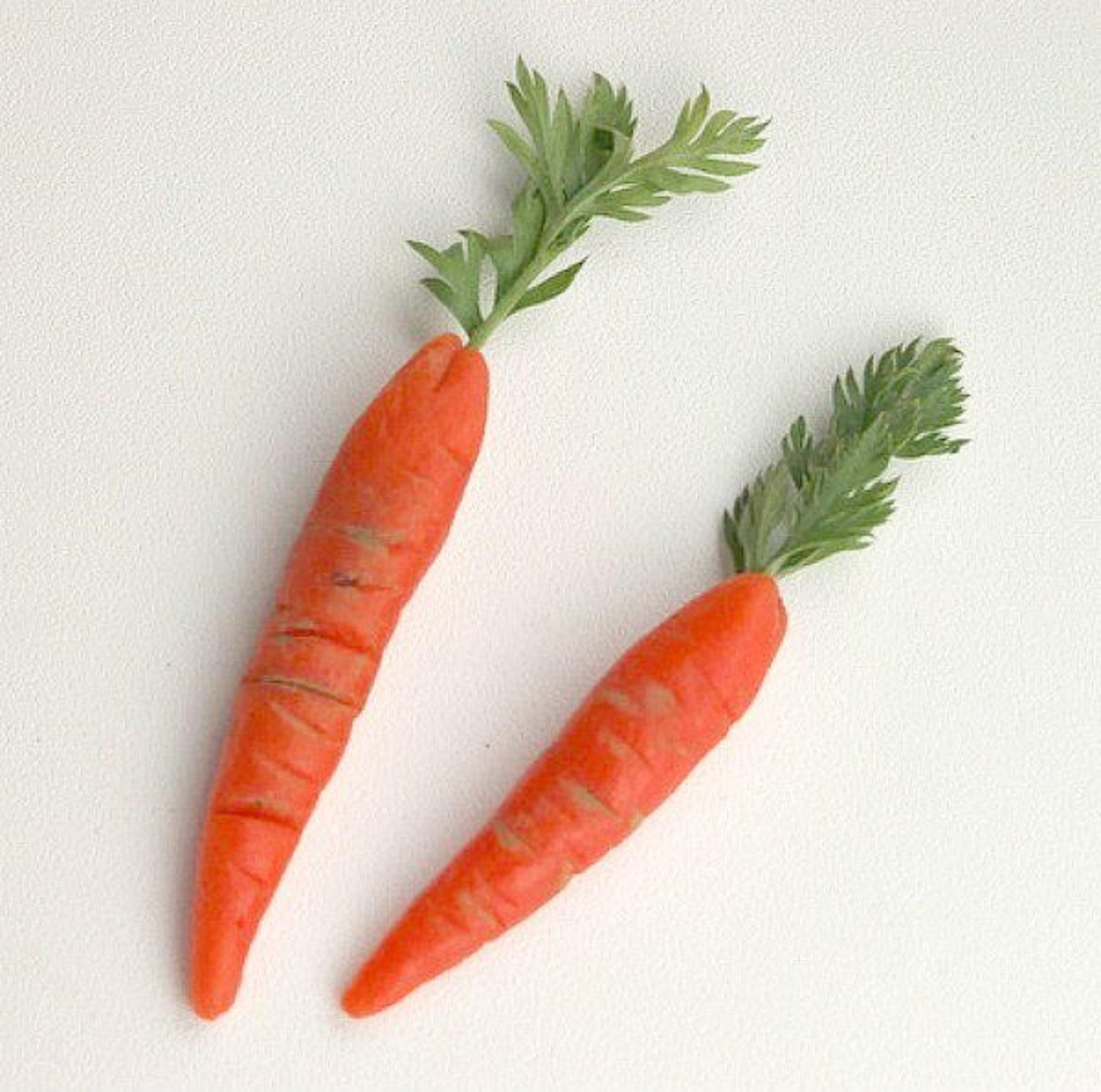 Common fresh Carrots