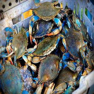 High quality sea foods fresh IQF Frozen Blue Swimming Crab whole raw