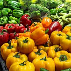 Fresh Capsicum/Fresh bell pepper/sweet pepper yellow /red/green