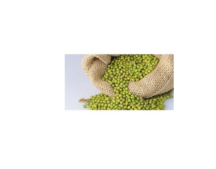 Fresh High Quality Organic Myanmar Pulses/ Green Gram/ Green mung beans for Sale