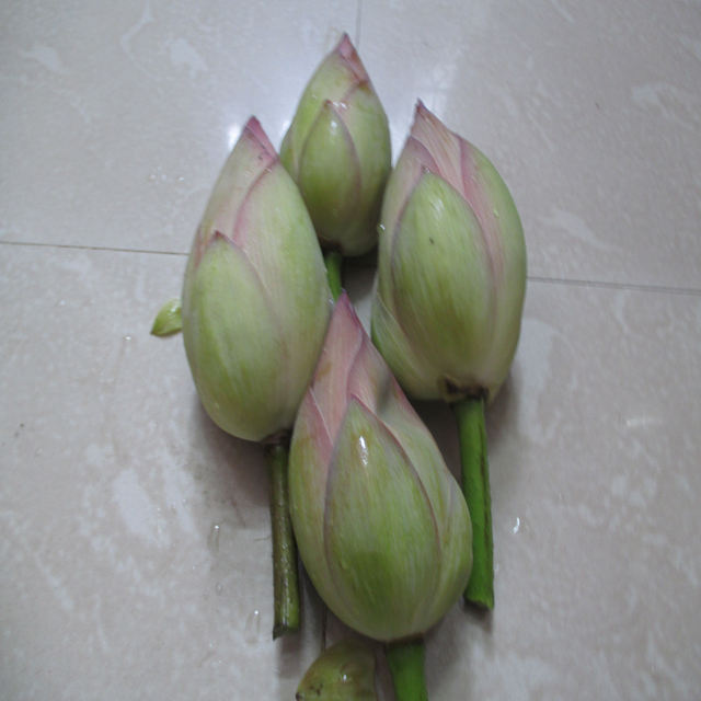 Fresh Lotus Flower Exporters In India To Malaysia / Singapore / Dubai / Canada / US
