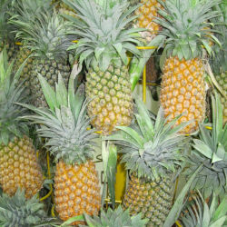 Grade A Fresh Pineapples