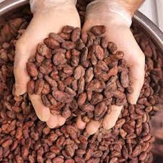 2021 Sales Best Wholesale price Cacao Beans,Dried Criollo Cocoa Beans for sale per 50kg bags,Dried Fermented Cacao cheap price