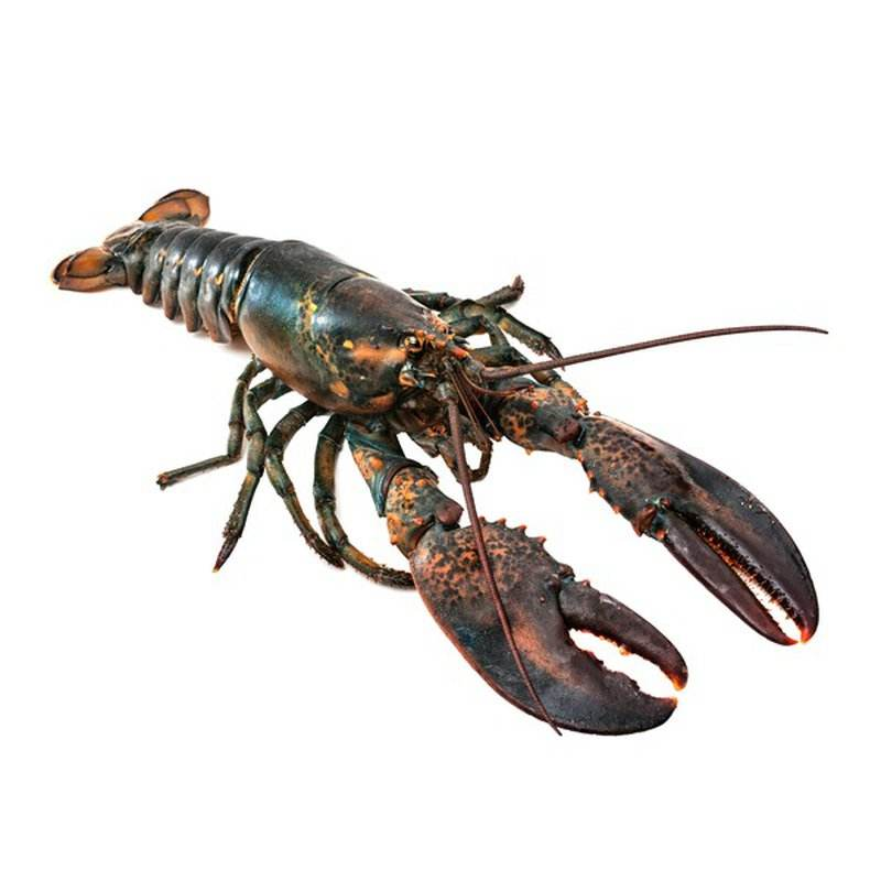 LIVE CRAYFISH AND LIVE LOBSTERS