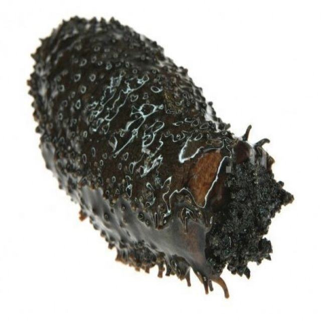 Fresh Frozen BQF sea cucumber