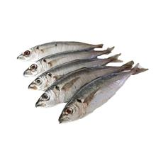 Best seller frozen round scab fish product of Hai Phu Company with IQF freezing method in Quang Ngai Vietnam
