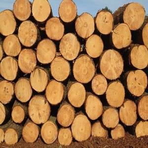 Teak Wood and Tali Wood, Padouk, Pine, Boxwood, Azobe Wood, Timber Logs Available/African Origin
