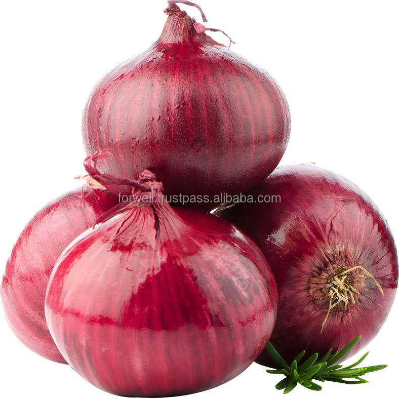Egyptian onion export container with low price