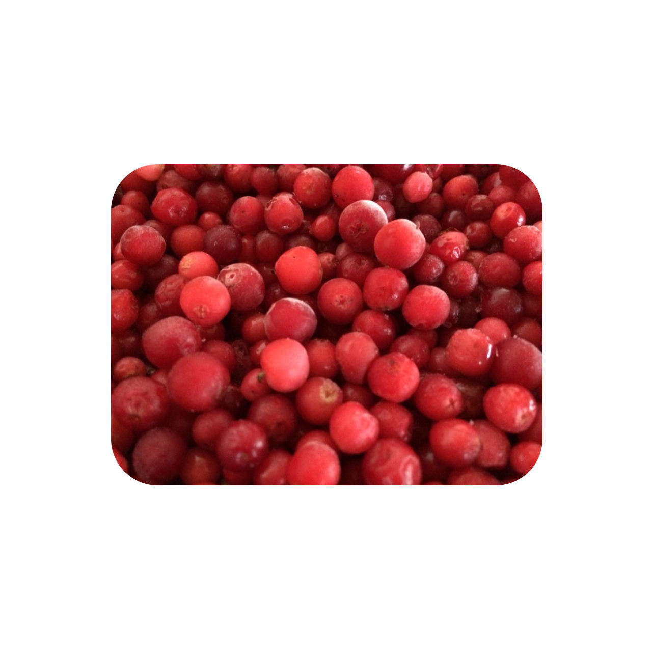Frozen wild cranberries fruit, buy wholesale