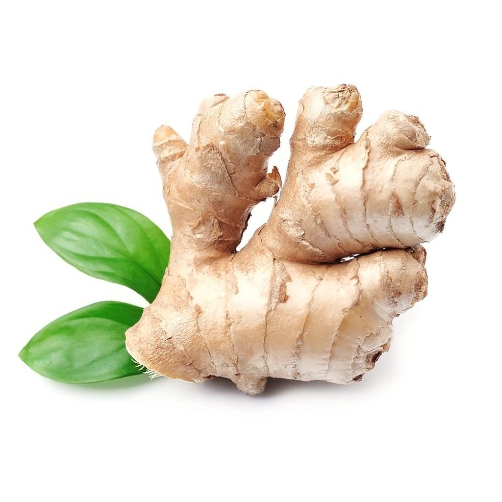 Wholesale Fresh Raw Ginger