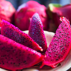 Provider of the Best Fresh Red Dragon Fruit
