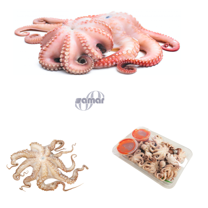 Frozen Octopus, Fresh From Spain (Whole), 6pcs/Box,36 lb Avg , Adult & Baby Octopus